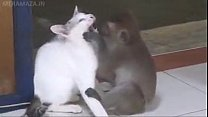 love for cat monkey صورة