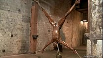Oiled ebony in inverted bondage toyed
