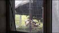 [rance 01: hikari wo motomete the animation] ⁃ Filming a couple out a window at a festival having fucky sucky in the grass thumbnail