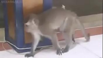 love for cat monkey