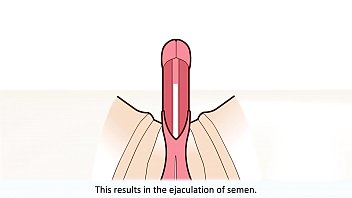 The male orgasm explained