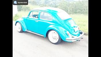 Asian beetle classification Fusca azul compilação muitooo gostosoooooooo
