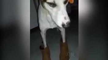 Cachorro baianor...