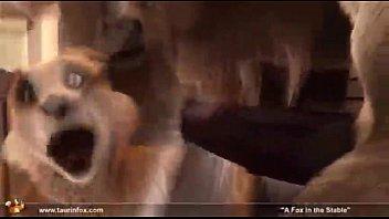 Fox in the stables Vorschaubild