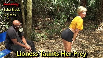 Lioness Taunts Her Prey