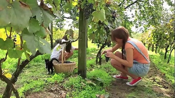 VivThomas - Vine - Hannah Sweet, Subil Arch