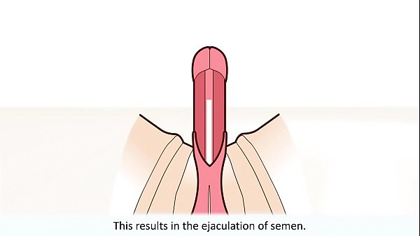 The male orgasm explained Thumb