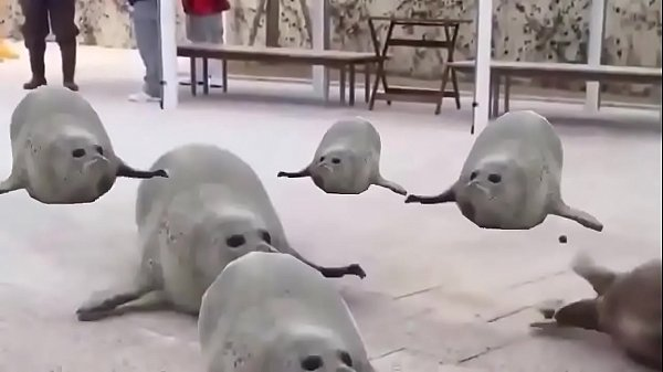 Seal jumping a lot to the sound of a song with a very funny content that will surely make you laugh in the peace of the lord love